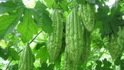 tri-hoi-nach-voi-kho-qua-1430840483977-93-0-1759-3264-crop-1430851926827jpg-bb-baaad9xWDC