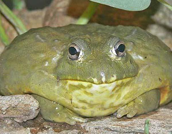 Nằm mơ thấy ếch báo hiệu điều gì?