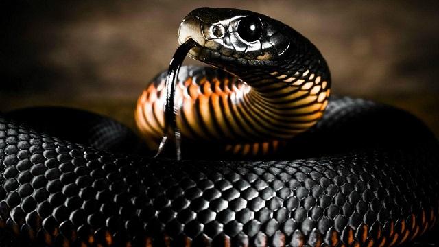 Mơ thấy rắn màu đen điềm báo gì đánh số gì
